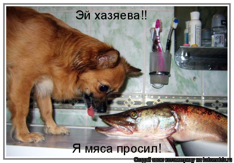 Котоматрица: Эй хазяева!! Я мяса просил!
