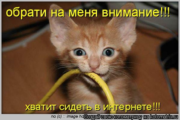 Котоматрица: обрати на меня внимание!!! хватит сидеть в интернете!!!