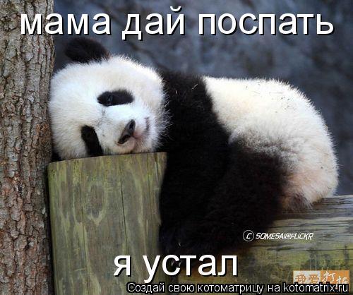 Котоматрица: мама дай поспать  я устал