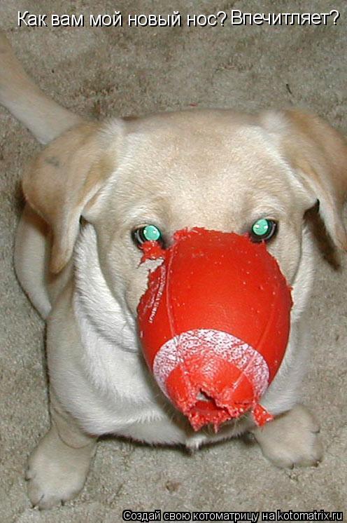 Котоматрица: Как вам мой новый нос? Впечитляет?
