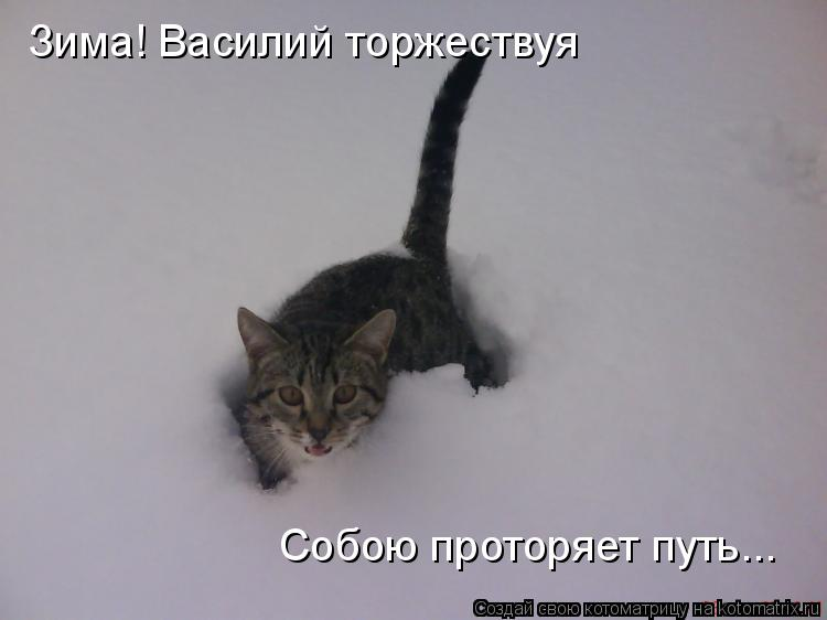 Котоматрица: Зима! Василий торжествуя Собою проторяет путь...