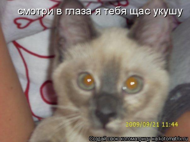 Котоматрица: смотри в глаза я тебя щас укушу