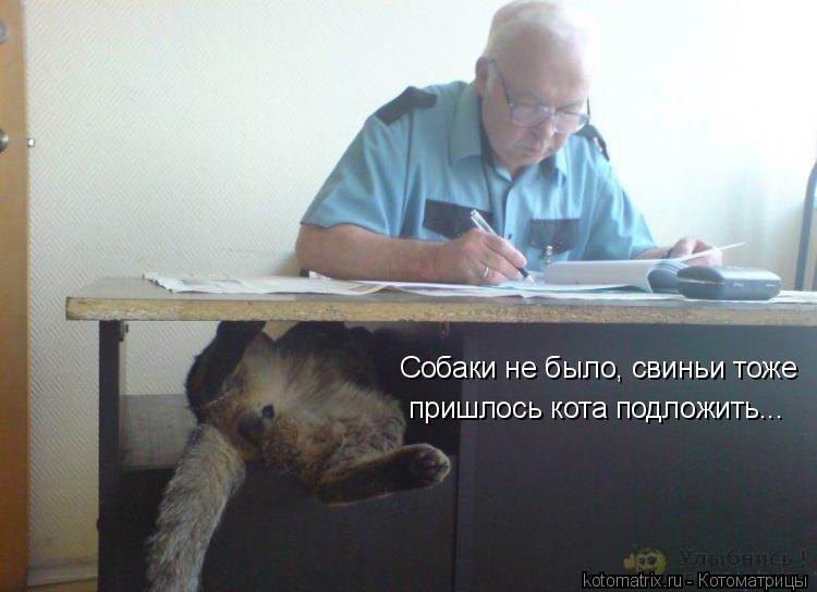 Котоматрица: Собаки не было, свиньи тоже пришлось кота подложить...