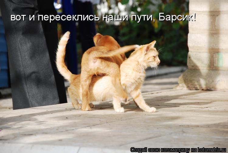 Котоматрица: вот и пересеклись наши пути, Барсик!
