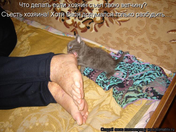 Котоматрица: Что делать если хозяин съел твою ветчину? Съесть хозяина! Хотя Вася додумался только разбудить....