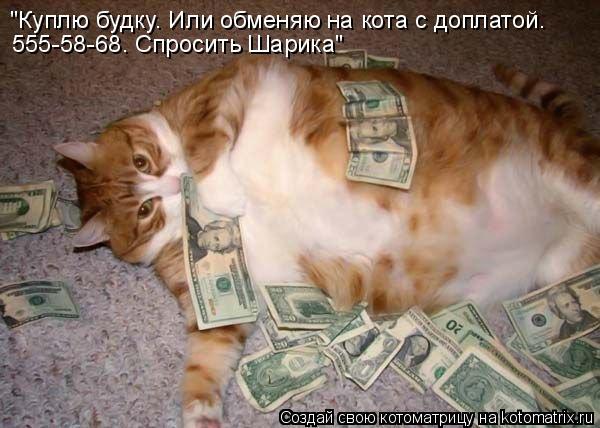"""Котоматрица: """"Куплю будку. Или обменяю на кота с доплатой. 555-58-68. Спросить Шарика"""""""