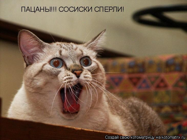 Котоматрица: ПАЦАНЫ!!! СОСИСКИ СПЕРЛИ!