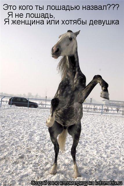 Котоматрица: Это кого ты лошадью назвал??? Я не лошадь, Я женщина или хотябы девушка