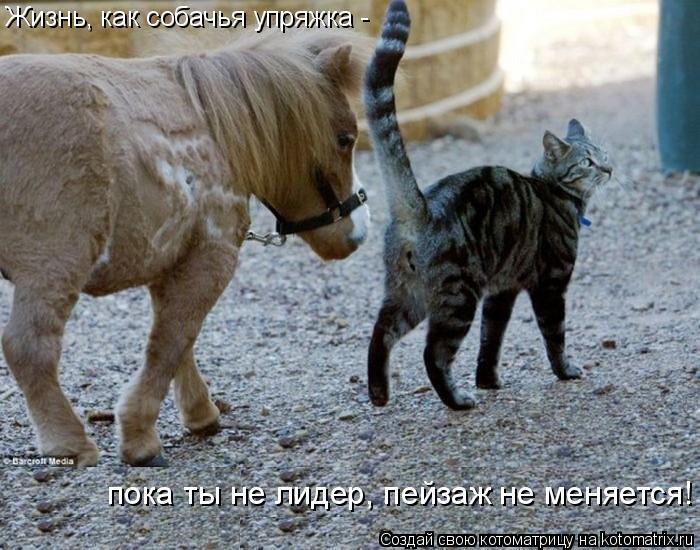 Котоматрица: Жизнь, как собачья упряжка -  пока ты не лидер, пейзаж не меняется!