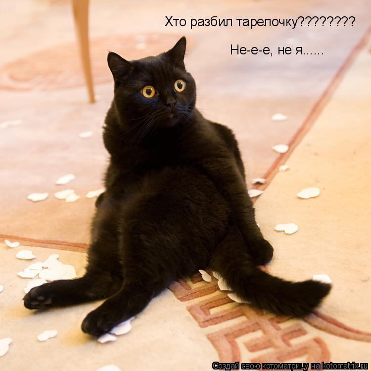 Котоматрица: Хто разбил тарелочку???????? Не-е-е, не я......