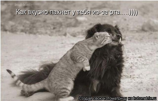Котоматрица: Как вкусно пахнет у тебя из-за рта.....))))