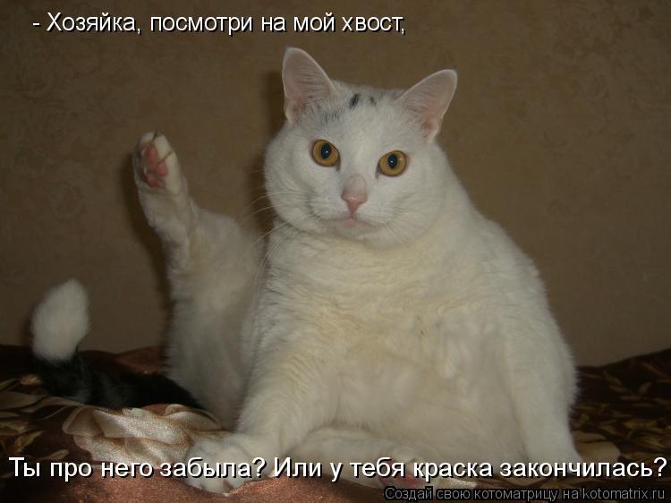 Котоматрица: - Хозяйка, посмотри на мой хвост,  Ты про него забыла? Или у тебя краска закончилась?