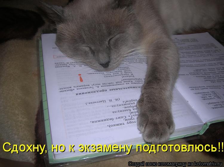 Котоматрица: Сдохну, но к экзамену подготовлюсь!!!