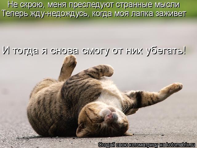 Котоматрица: Не скрою, меня преследуют странные мысли Теперь жду-недождусь, когда моя лапка заживет И тогда я снова смогу от них убегать!