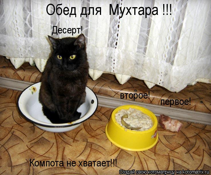 Котоматрица: первое! второе! Десерт! Компота не хватает!!! Обед для  Мухтара !!!