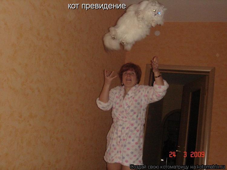 Котоматрица: кот превидение