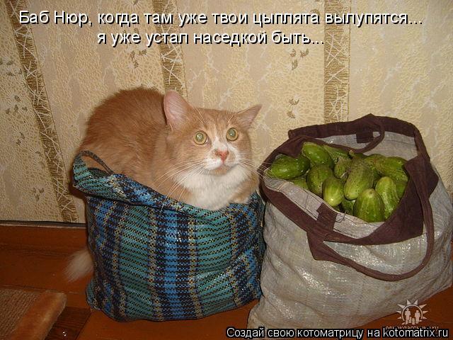 Котоматрица: Баб Нюр, когда там уже твои цыплята вылупятся... я уже устал наседкой быть...