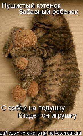 Котоматрица: Пушистый котенок Забавный ребенок С собой на подушку Кладет он игрушку