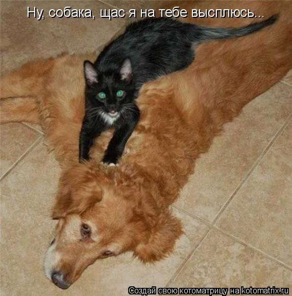 Котоматрица: Ну, собака, щас я на тебе высплюсь...