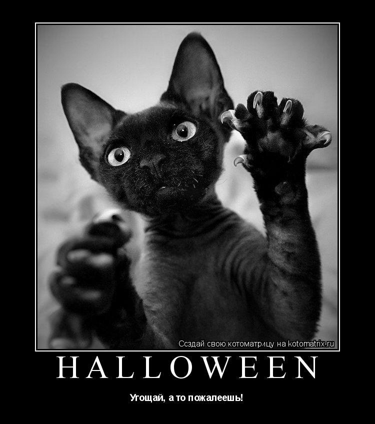 Котоматрица: Halloween Угощай, а то пожалеешь!