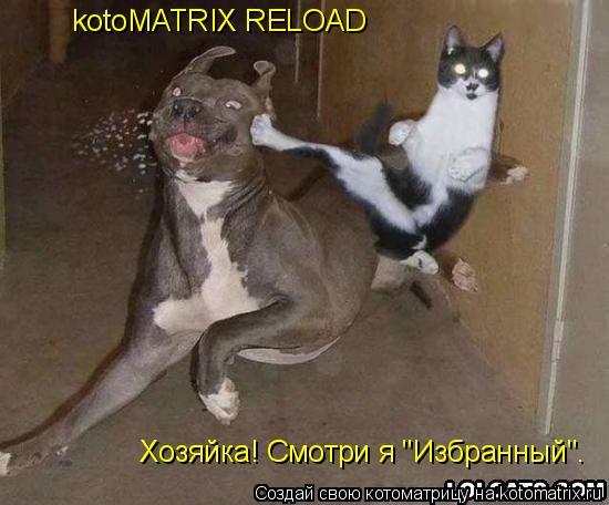 """Котоматрица: kotoMATRIX RELOAD Хозяйка! Смотри я """"Избранный""""."""