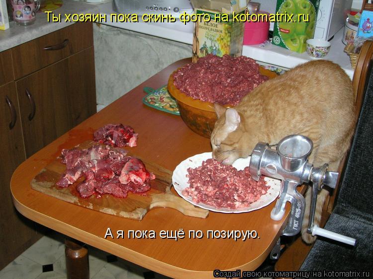 Котоматрица: Ты хозяин пока скинь фото на kotomatrix.ru А я пока ещё по позирую.