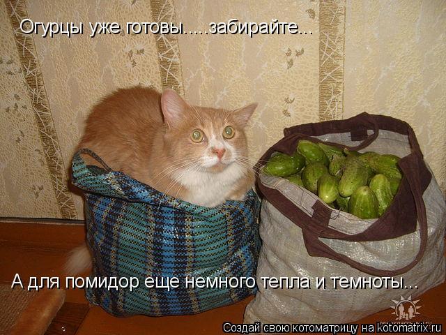 Котоматрица: Огурцы уже готовы.....забирайте... А для помидор еще немного тепла и темноты...