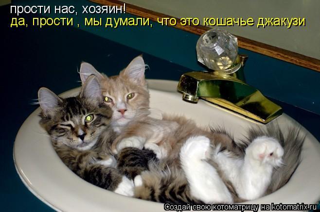 Котоматрица: прости нас, хозяин! да, прости , мы думали, что это кошачье джакузи