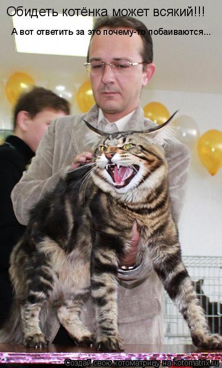Котоматрица: А вот ответить за это почему-то побаиваются... Обидеть котёнка может всякий!!!