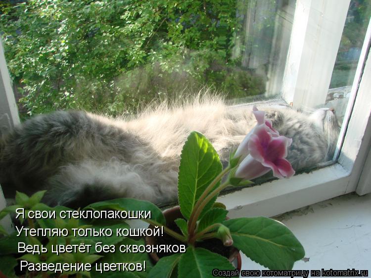 Котоматрица: Разведение цветков! Ведь цветёт без сквозняков Утепляю только кошкой! Я свои стеклопакошки