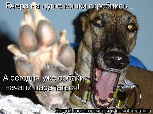 Котоматрица: Вчера на душе кошки скреблись... А сегодня уже собаки  начали царапаться!