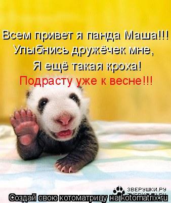 Котоматрица: Всем привет я панда Маша!!! Улыбнись дружёчек мне, Я ещё такая кроха! Подрасту уже к весне!!!