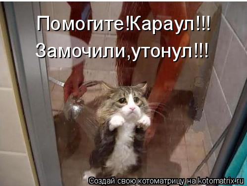 Котоматрица: Помогите!Караул!!! Замочили,утонул!!!