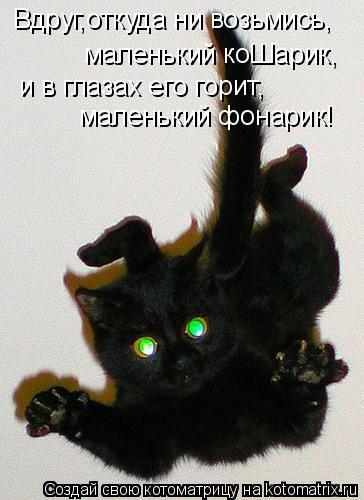 Котоматрица: Вдруг,откуда ни возьмись, маленький коШарик, и в глазах его горит, маленький фонарик!