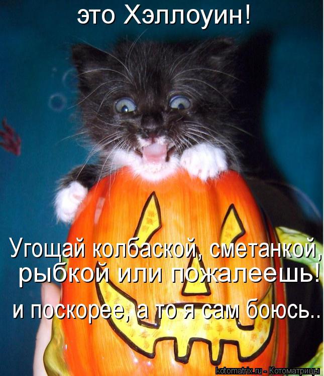 Котоматрица: это Хэллоуин!   Угощай колбаской, сметанкой, рыбкой или пожалеешь! и поскорее, а то я сам боюсь...  рыбкой или пожалеешь! и поскорее, а то я сам б