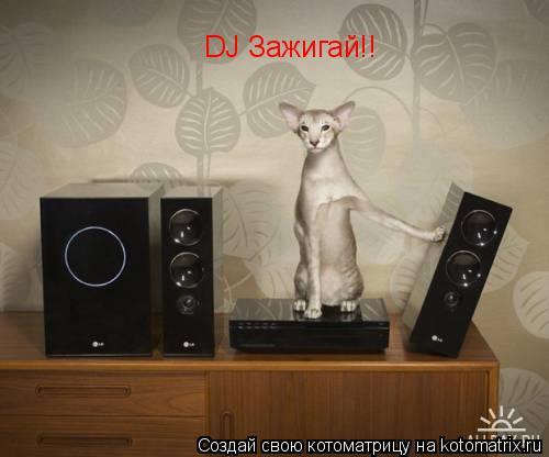 Котоматрица: DJ Зажигай!!