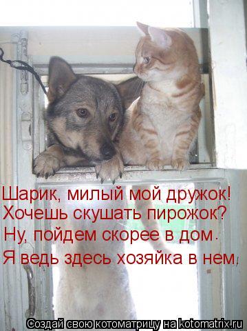 Котоматрица: Шарик, милый мой дружок! Хочешь скушать пирожок? Ну, пойдем скорее в дом . Я ведь здесь хозяйка в нем.