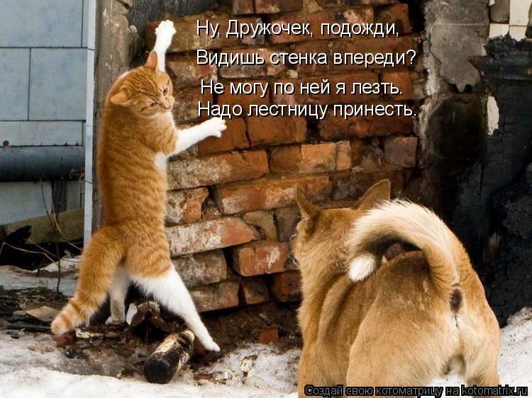 Котоматрица: Ну, Дружочек, подожди, Видишь стенка впереди? Не могу по ней я лезть. Надо лестницу принесть.