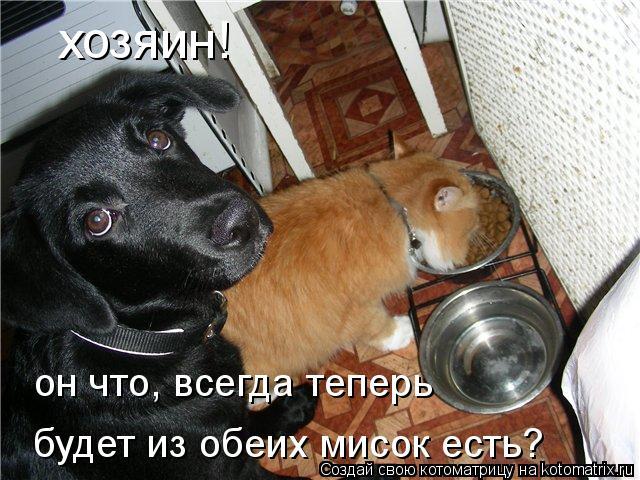 Котоматрица: хозяин!  он что, всегда теперь будет из обеих мисок есть?