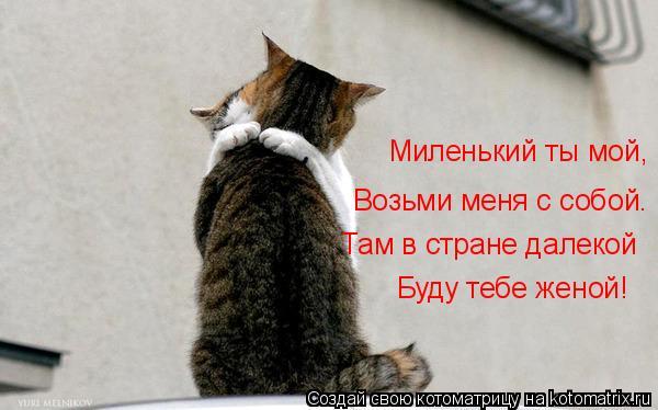 Котоматрица: Миленький ты мой, Возьми меня с собой. Там в стране далекой Буду тебе женой!