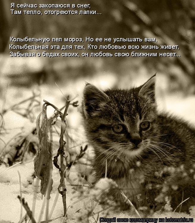 Котоматрица: Я сейчас закопаюся в снег,  Колыбельную пел мороз, Но ее не услышать вам,   Колыбельная эта для тех, Кто любовью всю жизнь живет,  Забывая о бед