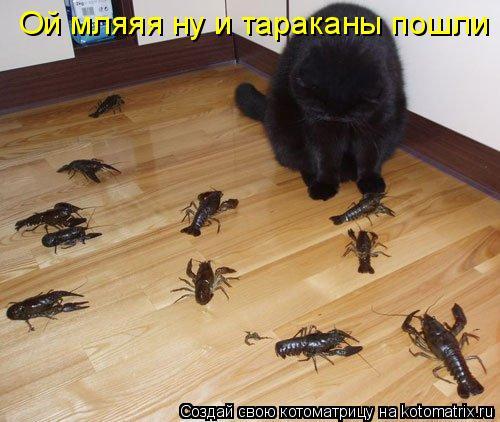 Котоматрица: Ой мляяя ну и тараканы пошли
