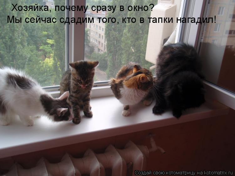 Котоматрица: Хозяйка, почему сразу в окно? Мы сейчас сдадим того, кто в тапки нагадил!