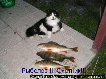 Котоматрица: Рыболов !!! Охотник!!!