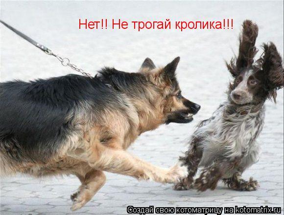 Котоматрица: Нет!! Не трогай кролика!!!