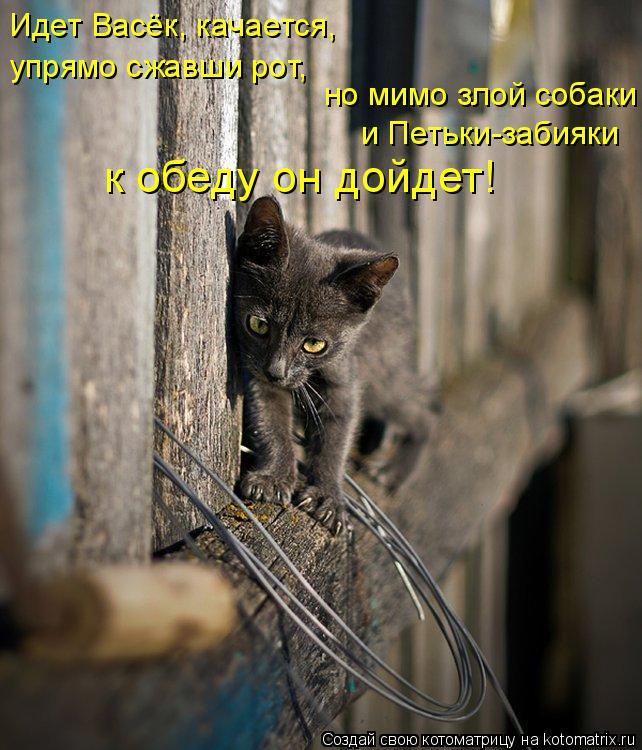 Котоматрица: Идет Васёк, качается, упрямо сжавши рот, но мимо злой собаки и Петьки-забияки к обеду он дойдет!