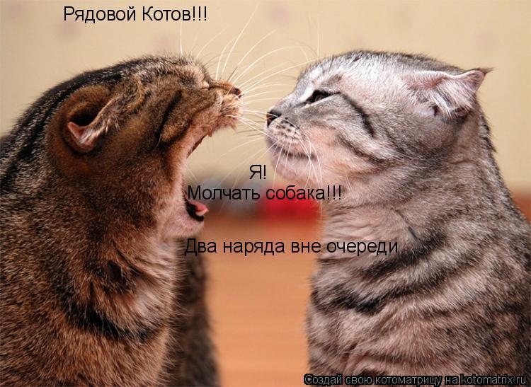 Котоматрица: Рядовой Котов!!! Я! Молчать собака!!! Два наряда вне очереди