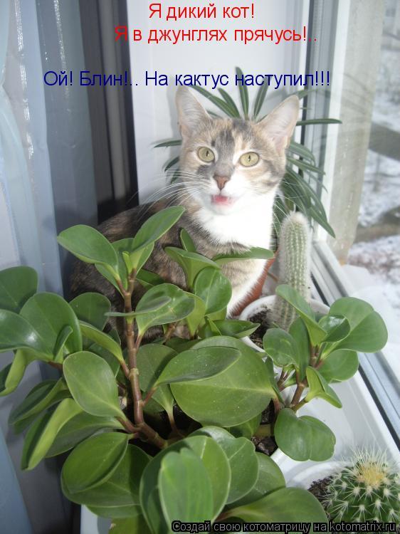 Котоматрица: Я дикий кот!  Я в джунглях прячусь!.. Ой! Блин!.. На кактус наступил!!!