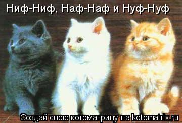 Котоматрица: Ниф-Ниф, Наф-Наф и Нуф-Нуф