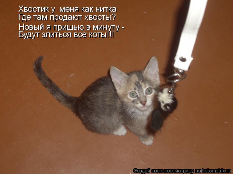 Котоматрица: Хвостик у  меня как нитка Где там продают хвосты? Новый я пришью в минуту -  Будут злиться все коты!!!